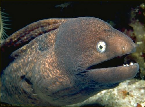 Bad-Joke-Eel.jpg