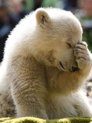 [Image: Facepalm-Bear.jpg]