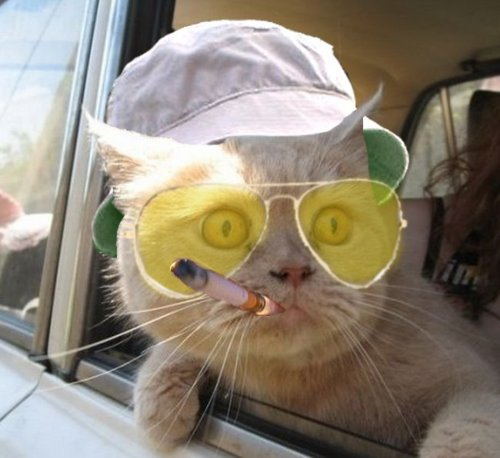 High Quality Fear And Loathing Cat Blank Meme Template
