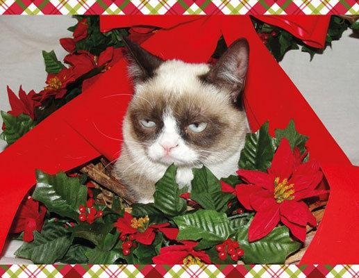 High Quality Grumpy Cat Mistletoe Blank Meme Template