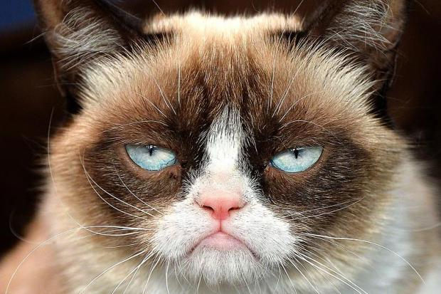 Grumpy Cat Not Amused Memes - Imgflip