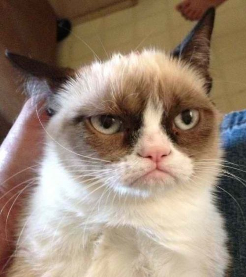 Grumpy Cat Reverse Meme Generator - Imgflip