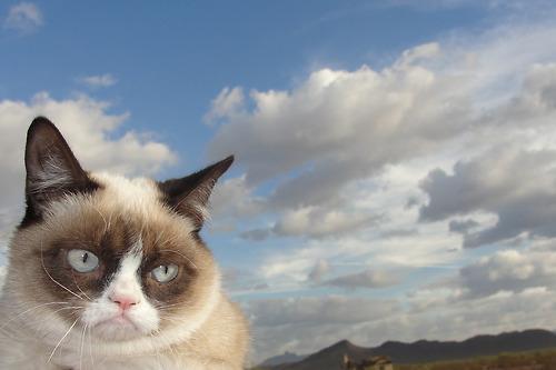 Grumpy Cat Meme Blank | www.pixshark.com - Images ...