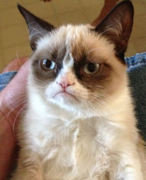 Grumpy Cat Blank Meme Template