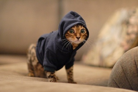 Hoody Cat Blank Meme Template