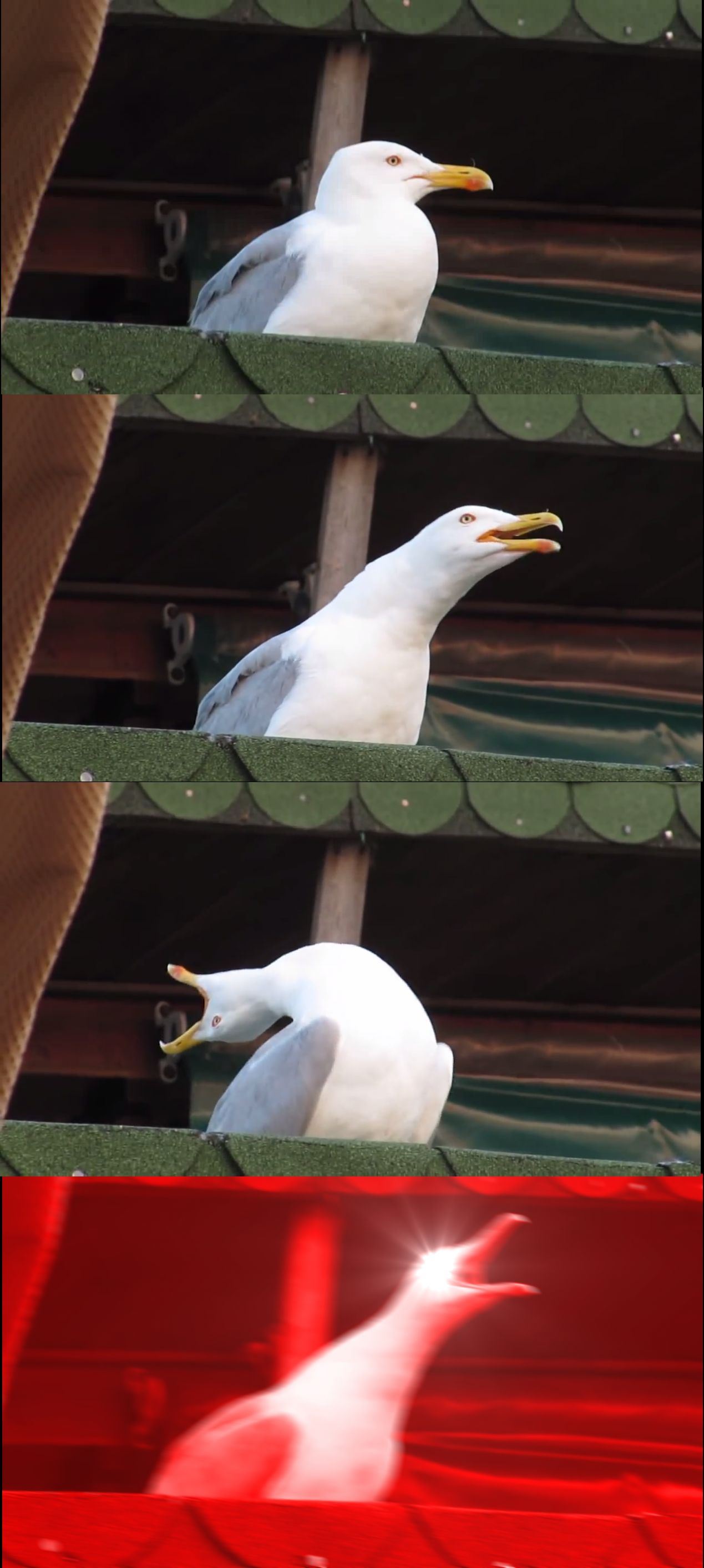 High Quality Inhaling Seagull Blank Meme Template