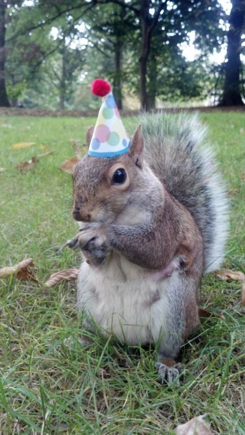 Super Birthday Squirrel Blank Meme Template